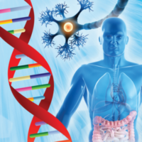 Inflammatory_and_Autoimmune_Signaling_Systems-400x400
