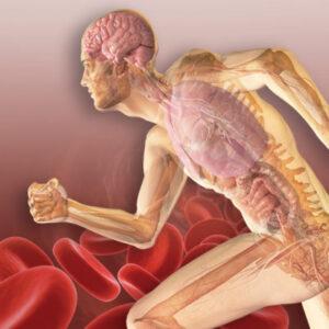 Neuroendocrine_Immunlolgy_of_Exercise_RGB-400x400